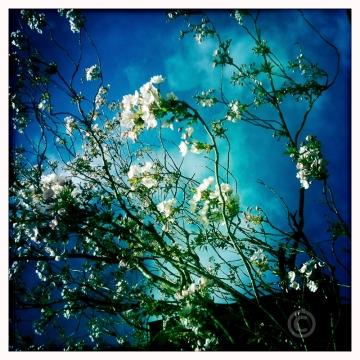 Hipsta blossom Nathalie Graafland photography 15364