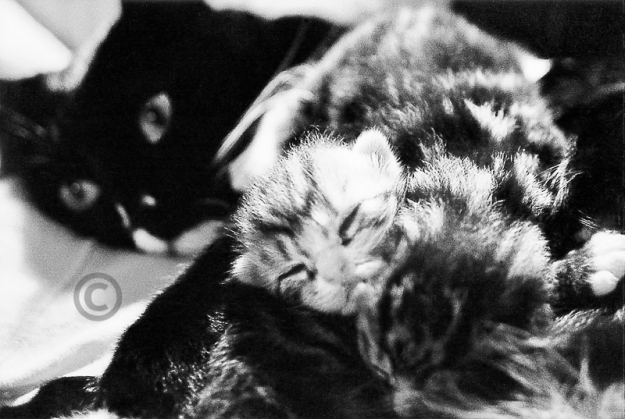 Nathalie Graafland photo of cats Piep, Dizzy & Jimi 14914