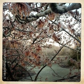 Fotografie door • Photography by Nathalie Graafland winter tree